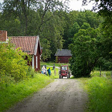 I ett somrigt landskap på Ridön åker en traktor förbi Kurö Gård. Fotograf: Pressbild