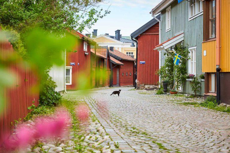 En katt står på en kullerstensgränd mellan färgglada hus på Kyrkbacken. Fotograf: Pia Nordlander