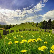 Bilden visar Sveriges största gravhög sommartid, när gräset är fullt med gula maskrosor.