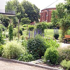 Bilden visar Botaniska trädgården med Västerås domkyrka i bakgrunden. Fotograf: Linda Heplinger.