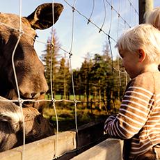 Ett barn besöker älgarna på Kungsbyns djurpark. Foto: Pressbild