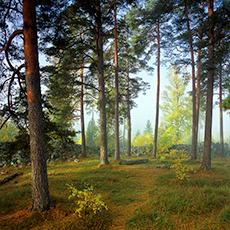 Bilden visar ett skogsbryn