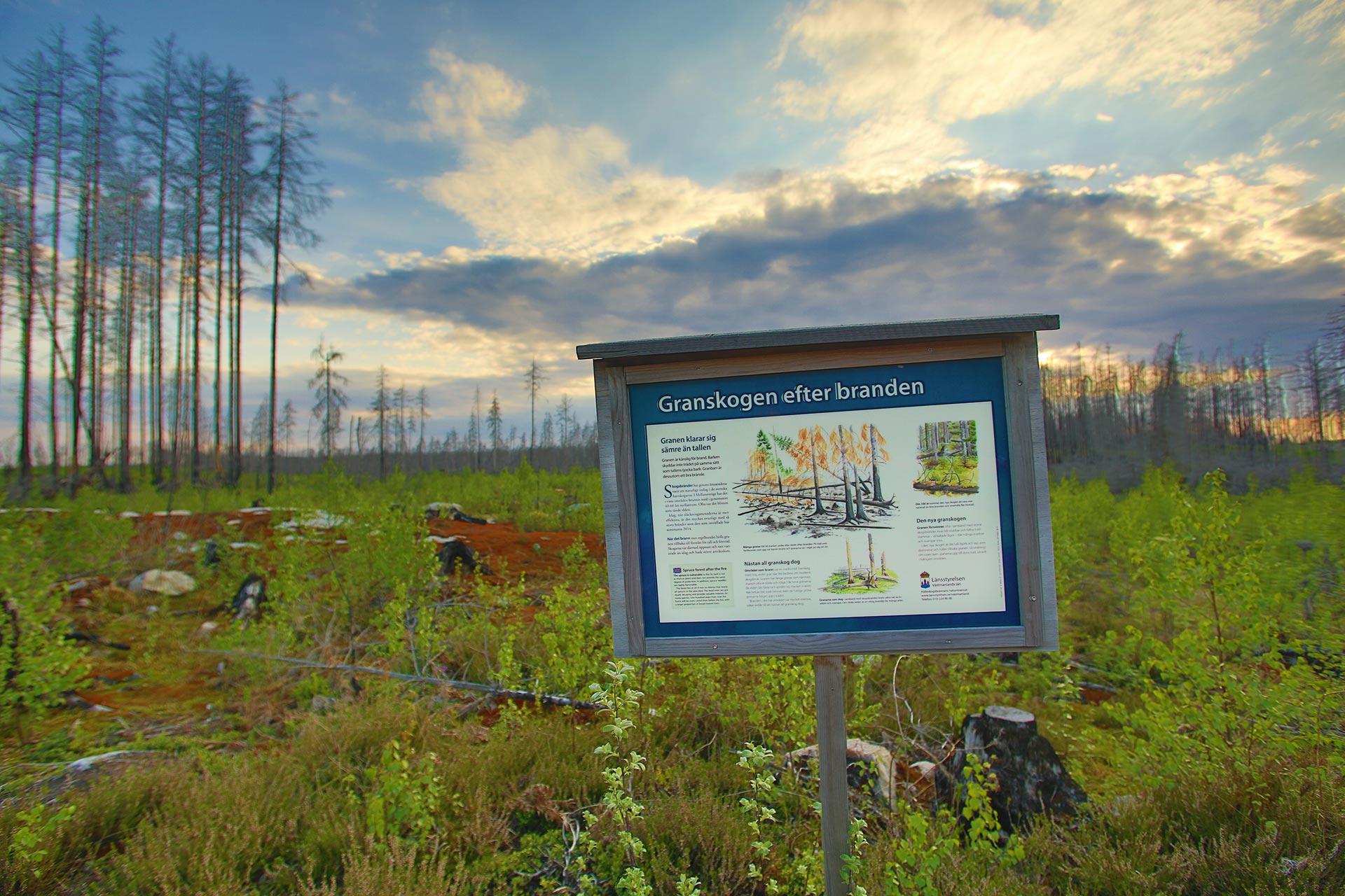 Vy över Hälleskogsbrännan med informationsskylt. Fotograf: Mostphotos