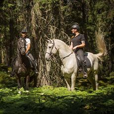 Två hästar i en solig skogsdunge på Bångbo gård i Västerås. Foto: Pressbild