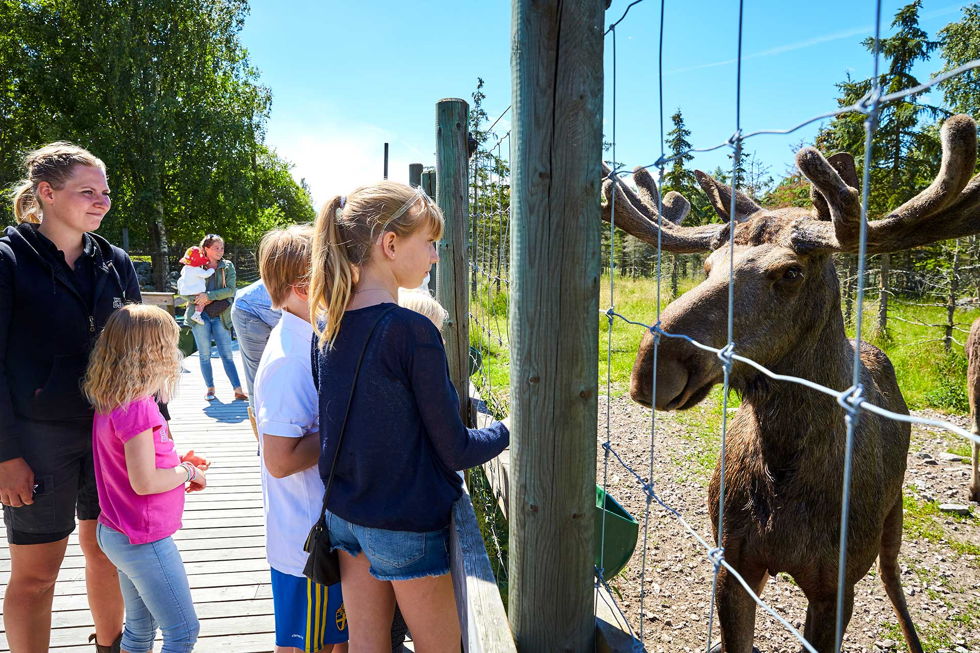 Några barn hälsar på en älg på Kungsbyns djurpark i Västerås. Fotograf: BildeN