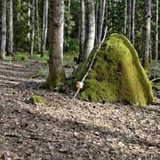 En utplacerad kontroll vid en stor sten i skogen på Björnö Västerås. Fotograf: Lennart Karlen