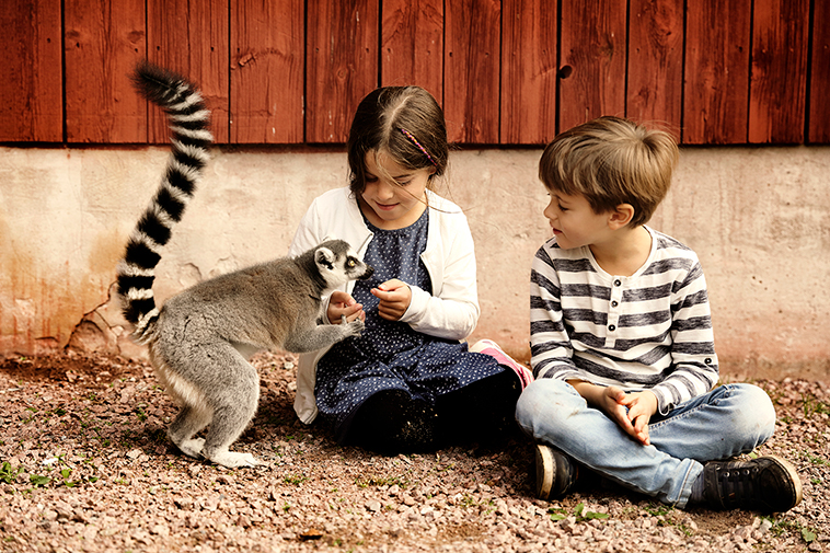 Barn hälsar på en lemur hos Kungsbyn i Västerås.