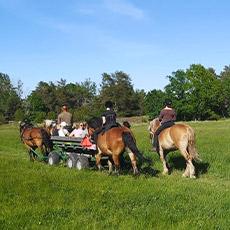 Häst och vagntur med Grönsaksbonden. Foto: Pressbild