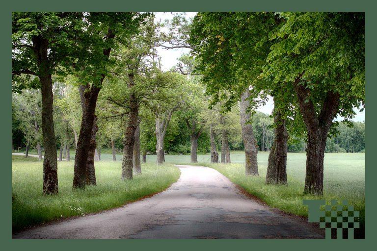 Vy över landsväg längs Tidövägen i Västerås. Foto: Mostphotos