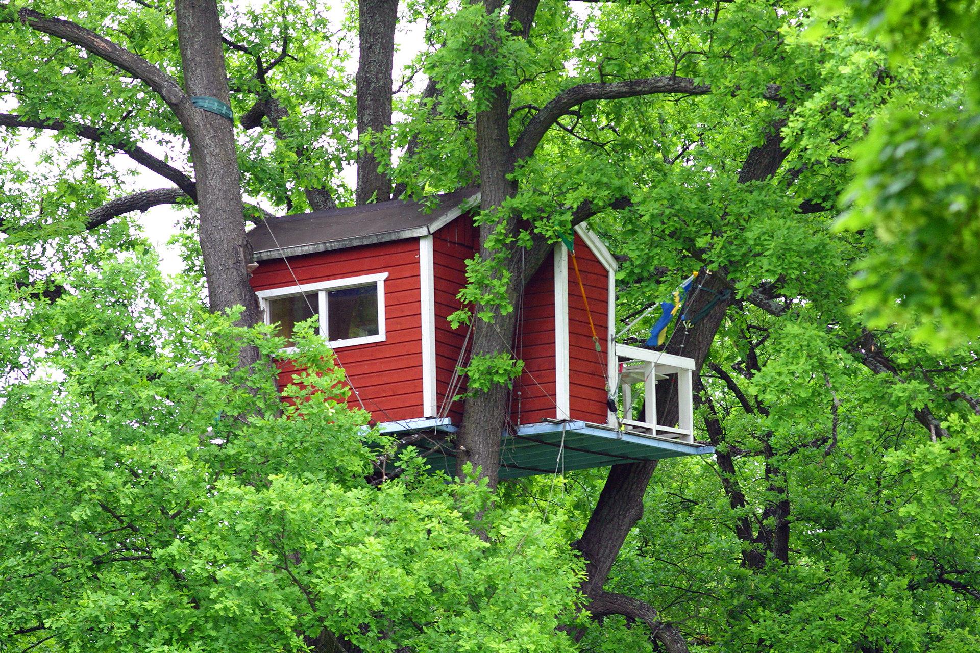 Ett litet rött hus i ett stort träd med en svensk flagga. Fotograf: Clifford Shirley
