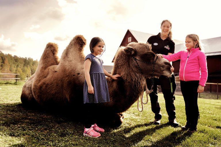 Två barn klappar en kamel. Fotograf: Pressbild Kungsbyn
