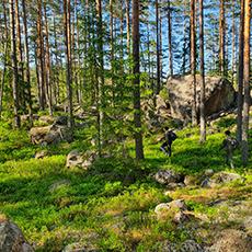 Männsikor som vandrar i vildmarken. Foto: Jonas Landolsi