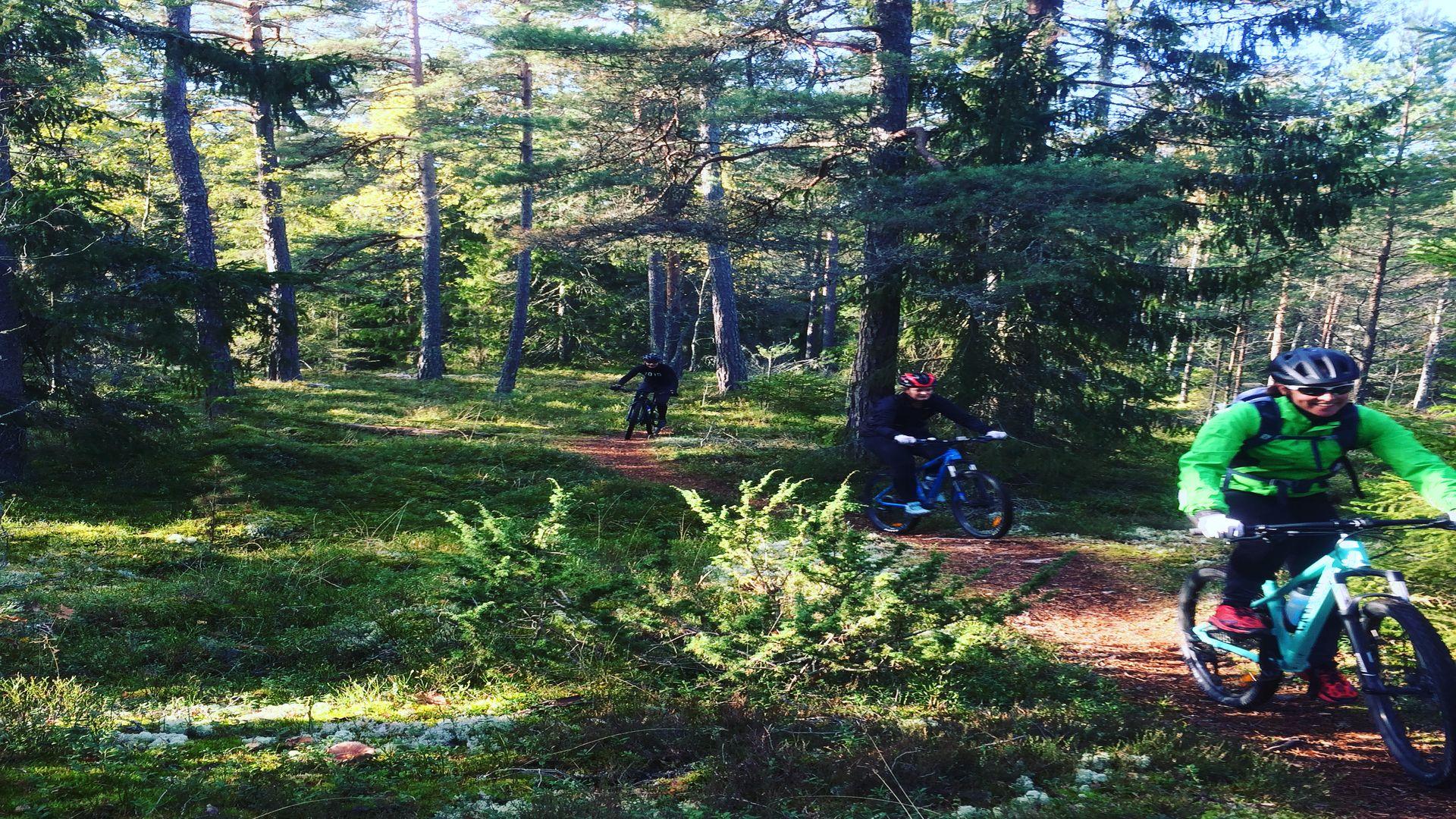 2 personer cyklar fridfullt i skogen. Fotograf: Pressbild Kungsörstorp