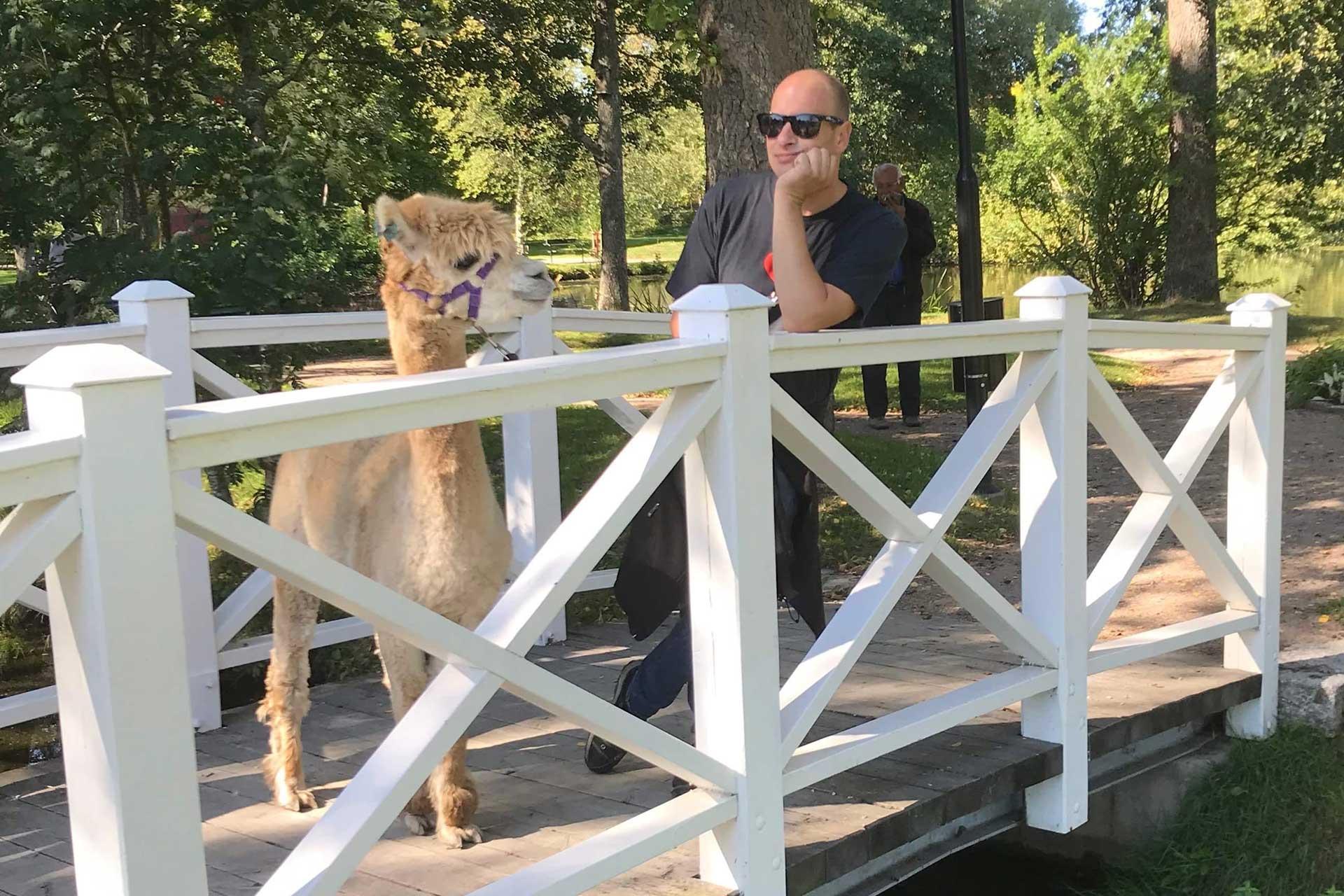 Det står en man och en alpaca på en bro. Fotograf: Pressbild