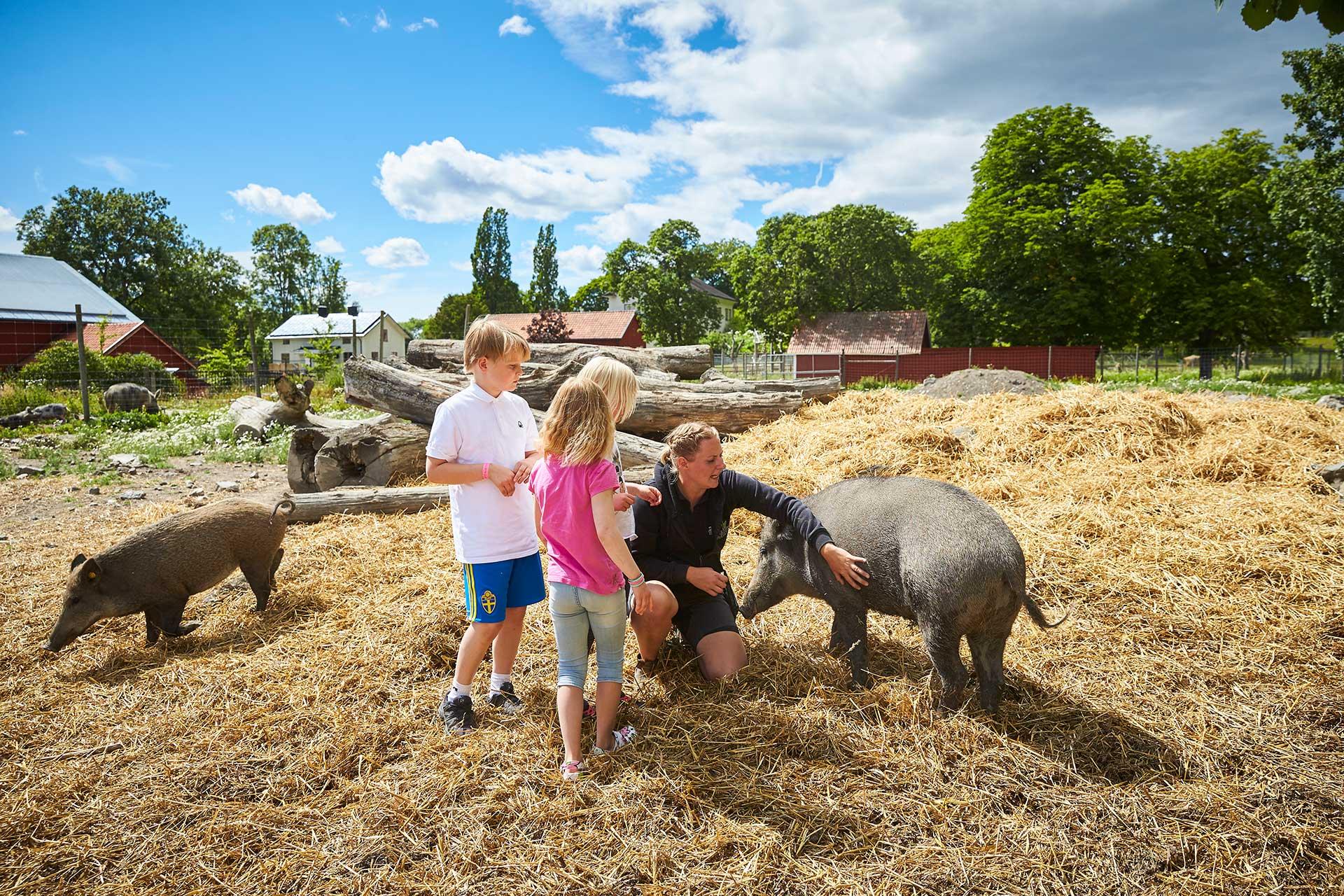 Barn klappar grisar på Kungsbyns Djurpark i Västerås. Fotograf: BildeN